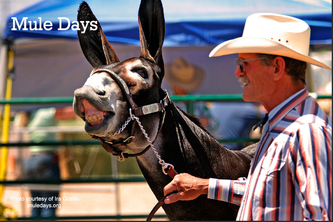 Mule Days Rodeo in Bishop California