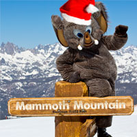 Mammoth is ready for Christmas Holidays. Woolly is ringing in the holidays